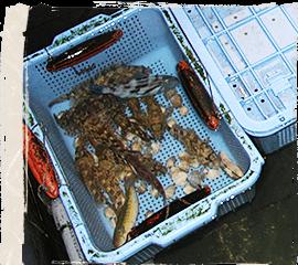御食事処まるよし 地元室津の新鮮な魚介